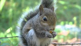 What makes you beautiful - One Direction, (Feat. Squirrels). Thumbnail