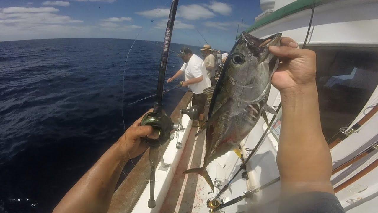 Yellowfin tuna fishing 2015 malahini san diego ca youtube for San diego tuna fishing