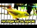 Masteran Kecial Kuning Speed Pendek Terbukti Ampuh  Mp3 - Mp4 Download
