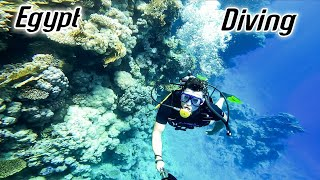 Дайвинг Египет Шарм эль Шейх Diving Egypt Sharmelsheikh