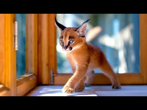 Top 10 Most Gorgeous Cats In The World 2020