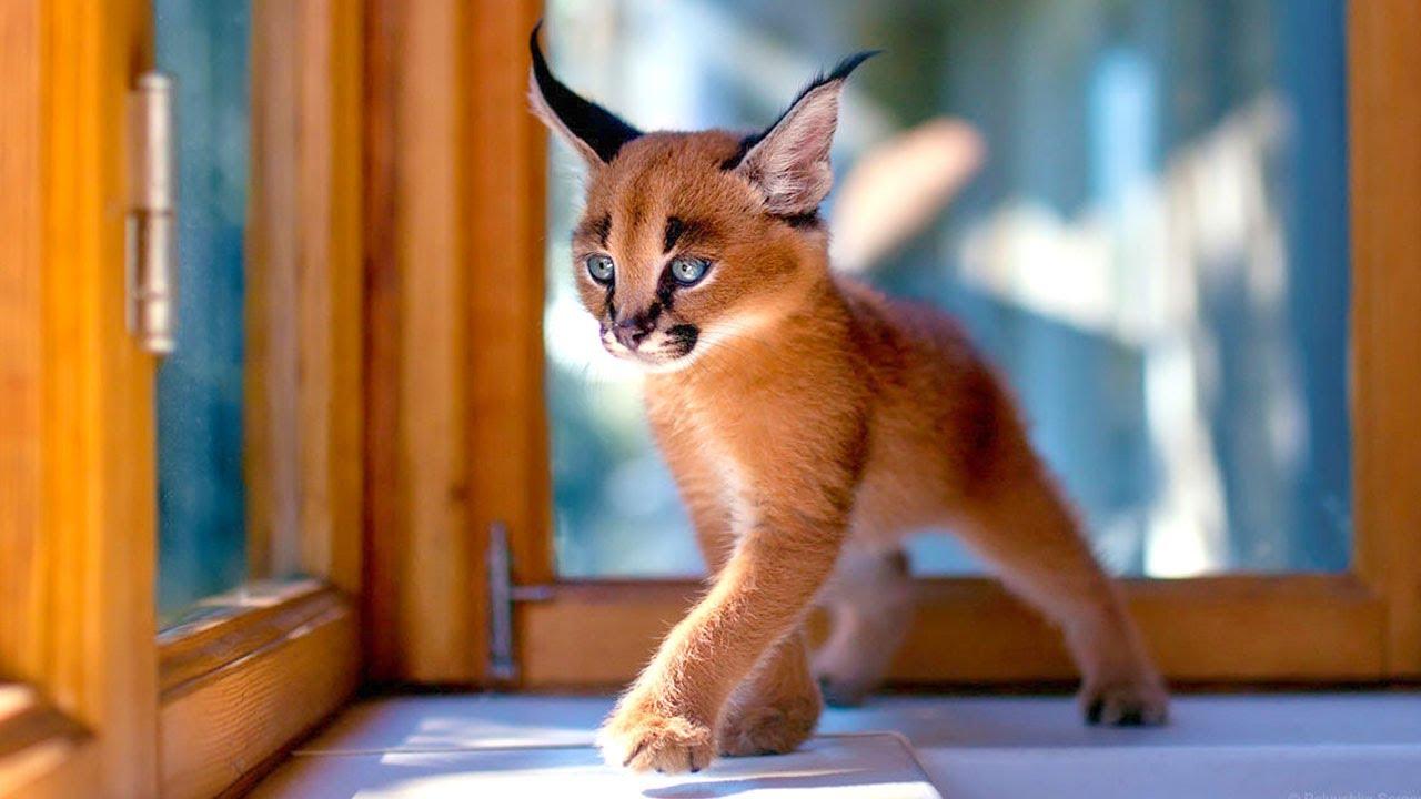 اجمل القطط في العالم