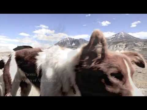 NEW Film on Paonia, Colorado 1080P (Trailer)