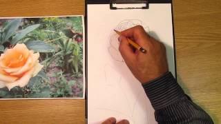 Как нарисовать розу. Часть 1. Урок 26. How to draw a rose. Lesson 26(Изучим, как нарисовать розу карандашом: how to draw a rose, как рисовать лепестки розы, как рисовать бутон розы,..., 2013-08-26T09:47:10.000Z)