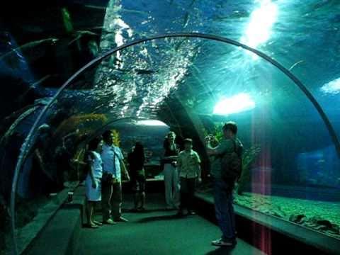 Ocean World at Siam Paragon  Bangkok  Thailand