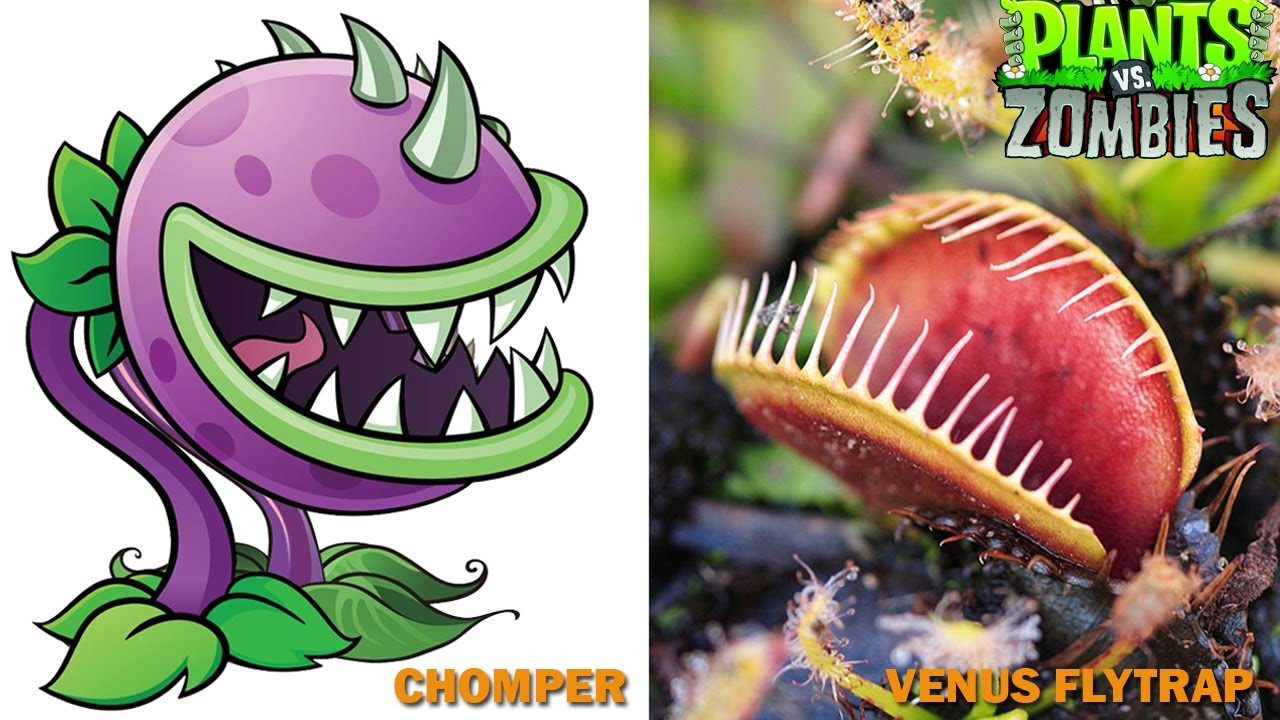 Plants Vs Zombies Characters In Real Life Youtube