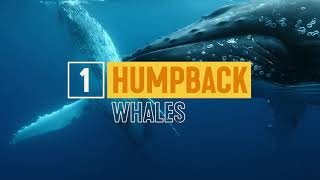 Must-Do Whale-Watching Experiences| Nature & Wildlife | Tourism Australia