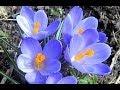 Весенний аромат - Spring fragrance