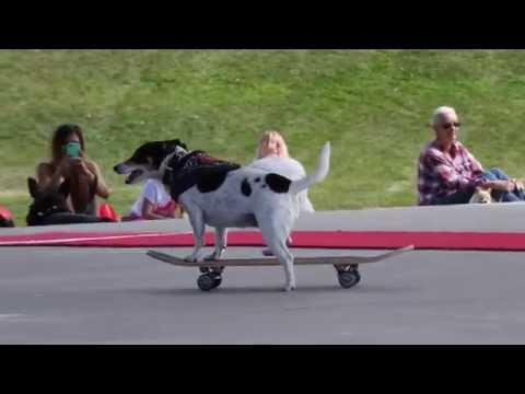 The Best Dog Tricks From Sunday at Woofstock 2015