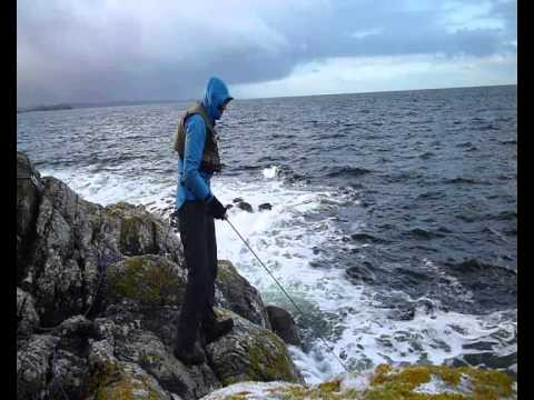 Pollock / Pollack Fly Fishing Northwest Highlands - Assynt Fly Fishing