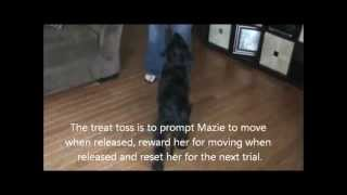 Clicker Training Basics: Teach A Dog To Sit (by Certified Professional)