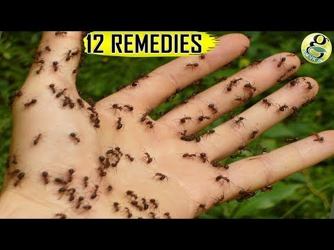 How can you get rid of ants in your garden