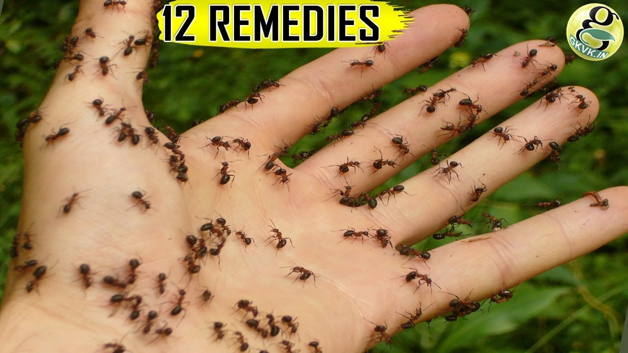 Natural Ant Remedies How To Get Rid Of Ants At Home And Garden Top 12 Ant Killer Ways Youtube