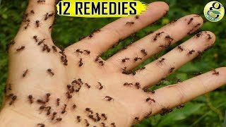 NATURAL ANT REMEDIES: How to get rid of Ants at Home and Garden – Top 12 Ant Killer Ways