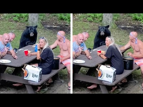 Viral: Familia alimenta a un oso que llegó al picnic | Remolacha ...