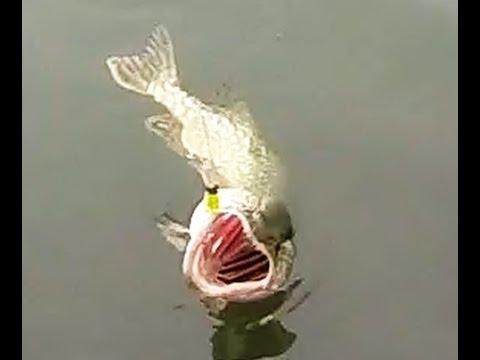 Mission Maskinongé Acheter une canne à pêche en février…