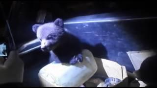 Медвежата на трассе
