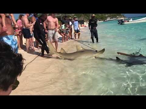 Shark Wrangling in the Bahamas