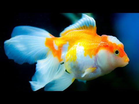 Fish Aquarium Near Me