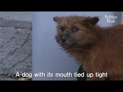 Animal Abuser Tied This Stray Dog's Mouth With A Rope | Kritter Klub