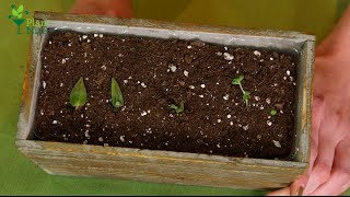 Grow Your Own Succulent Babies