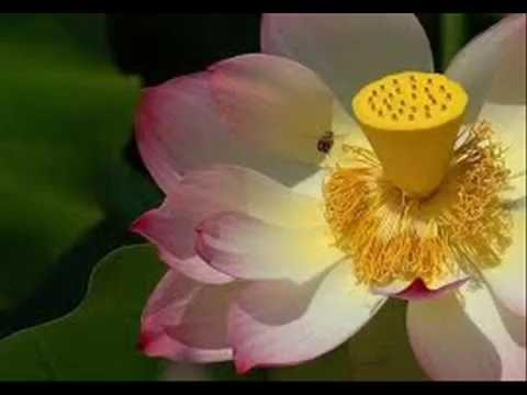 13/38- Kinh Dieu Phap Lien Hoa- Pham duoc thao du & tho ky- Hoa Thuong Tuyen Hoa Giang Giai