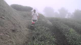 Tea Farming in Alishan Taiwan | Tea Pursuit
