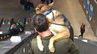 big-puppy-is-adorably-scared-of-escalators