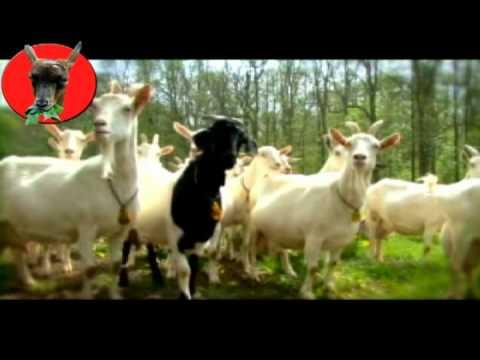 Promotiefilmpje voor de Geitenboerderij in het Amsterdamse Bos