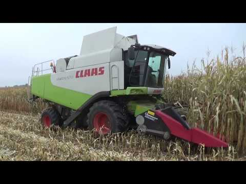 Комбайн Claas Lexion 570 работает на уборке кукурузы