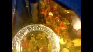 Жрем корм для рыбок(Это видео загружено с телефона Android., 2011-03-07T14:33:41.000Z)