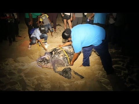 Trinidad and Tobago: empowering the local community to save turtles