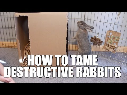 How To Cure Destructive Behavior In Rabbits!