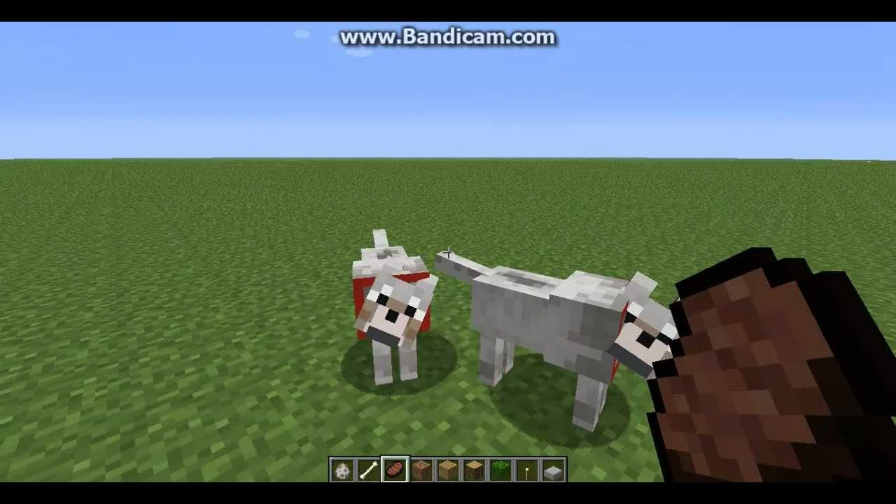 How to Tame Dogs and Make Baby Dogs In Minecraft - YouTube