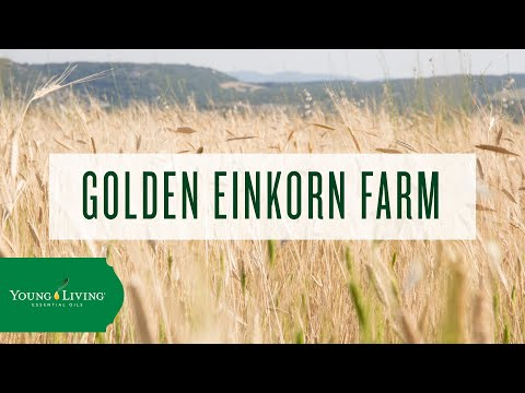 golden-einkorn-farm-|-young-living-essential-oils
