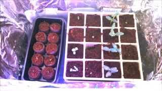 Build A Led Grow Light Box - Easy, Inexpensive And Effective Plant Light.