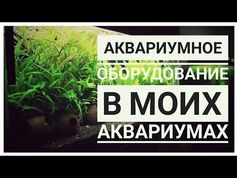 Сомы аквариумные. Рыбки сомики аквариумные виды