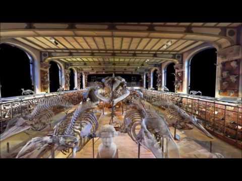 Muséum National d'Histoire Naturelle de Paris - Galeries d'Anatomie comparée et de Paléontologie