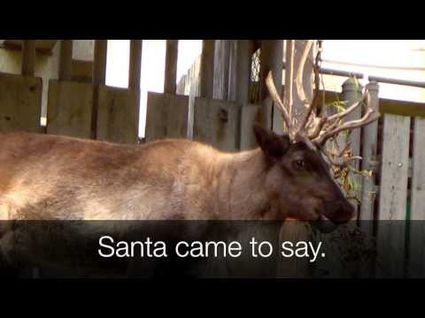 RUDOLPH the Red-Nosed Reindeer SONG with Lyrics (Real Reindeer Scenes)