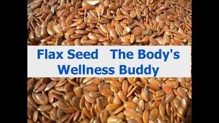 Flax Seed   The Body's Wellness Buddy