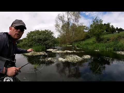 Dry Fly Fishing Action
