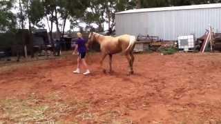 Лошадь во время болезни