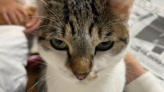 オレの彼女(猫)。ノーカット。