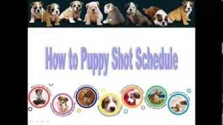 Puppy Shot Schedule | How To Puppy Shot Schedule