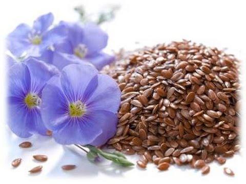 Семя льна: польза и вред, полезные свойства и противопоказания