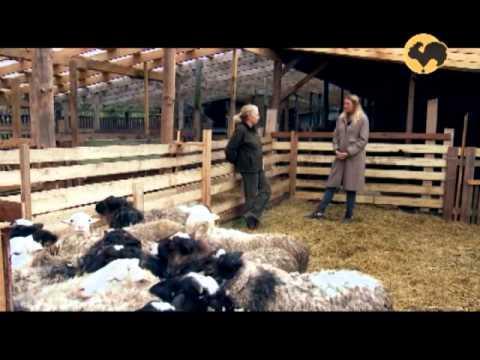 Овцеводство. Многопородное скрещивание овец. Живой дом 123.