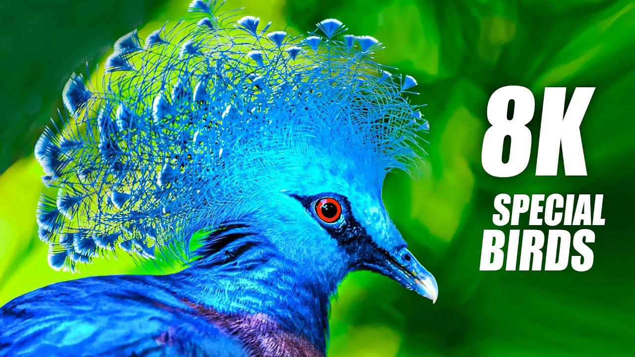 The Beauty of Birds in 8K VIDEO ULTRA HD 60FPS HDR