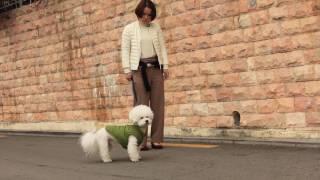 [강아지 훈련] 산책할때 생기는 문제 해결