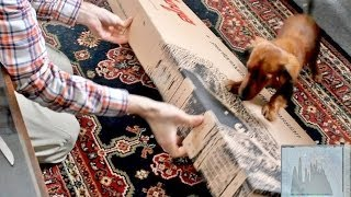 Electro Rock Original music - Mystery Unboxing and Cute Dog!