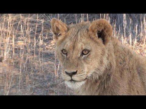 Kgalagadi Transfrontier Park in 100 Seconds HD